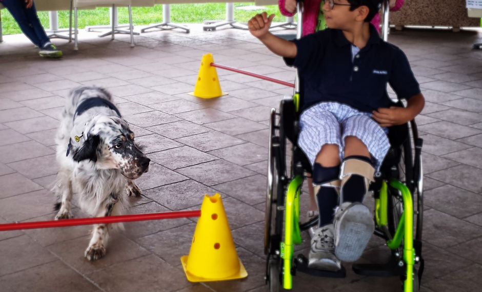 (H)Agility Dog per Disabili